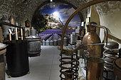 Exhibition of stills for distilling lavender, Absolue Lavande shop, rue de la Sauneraie, Sisteron, Alpes de Haute Provence, France