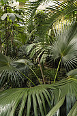 In the tropical greenhouse, Botanical Garden of the University of Strasbourg, rue Goethe, Strasbourg, Bas Rhin; France