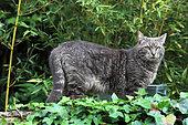 Cat standing in a garden