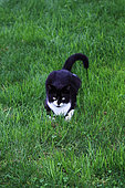 young black and white cat lying in the grass