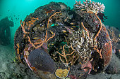 Sponges and corals on artificial reefs made from truck tires, Dauin, Philippines