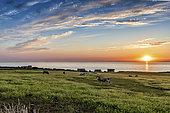 Hamlet of Strouanne at sunset, Pas de Calais, France
