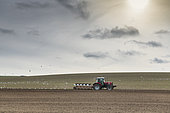 Gulls following a farmer ploughing his field, Escalles, Hauts de France, France