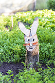 Decorative rabbit in a vegetable garden in springtime, Pas de Calais, France