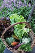 Autumn vegetable basket, France