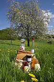 Treasure of Balloons by patissier Denis Platte, jam, kirsch and fruit juice from Nadine Vaulot, regional products and cherry blossoms in orchard, Fougerolles Saint Valbert, Haute Saone, France