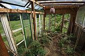 Greenhouse, garden Une Figue dans un Poirier, participative operation, permaculture, Girmont, Girmont-Val d'Ajol, Vosges, France