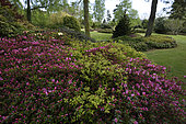 Rhododendrons, Jardin des Callunes, Ban-de-Sapt, Vosges, France