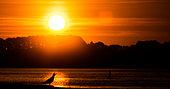 Goéland argenté (Larus argentatus ) criant sur le littoral au lever du soleil, Bretagne, France