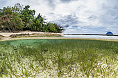 Mixed seabed with Manatee Grass (Syringodium filiforme) and Turtle Grass (Thalassia testudinum), in front of Siladen Island, Bunaken Marine National Park, North Sulawesi, Indonesia.