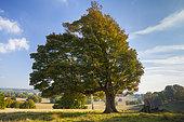 Autumn landscape, Petworth park, West Sussex, UK
