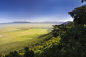Ngorongoro crater, southern Serengeti, Tanzania.