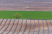 Vineyards, Agricultural landscape, La Rioja, Spain, Europe