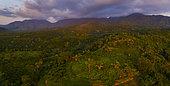 Plantations de fruits et forêt tropicale, Aticama, chaîne de montagnes de San Juan, municipalité de San Blas, baie de Matanchen, océan Pacifique, Riviera Nayarit, État de Nayarit, Mexique