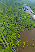 Mangrove, La Tovara National Park, Ramsar Site, Wetlands of International Importance, San Blas Town, Matanchen Bay, Pacific Ocean, Riviera Nayarit, Nayarit state, Mexico, Central America, America