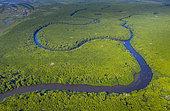 Mangrove, La Tovara, Site Ramsar, Ville de San Blas, Baie de Matanchen, Océan Pacifique, Riviera Nayarit, État de Nayarit, Mexique,