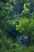Birdwatching, San Juan Mountain Range, San Blas municipality, Matanchen Bay, Pacific Ocean, Riviera Nayarit, Nayarit State, Mexico, Central America, America