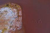 FLAMENCO DE JAMES, PARINA CHICA, Phoenicoparrus jamesi, Aerial View, Laguna Carachi Pampa, El Peñón village, La Puna, Argentina, South America, America