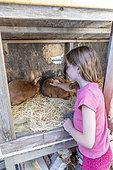Girl stroking domestic rabbits' Fauve de Bourgogne' in a hutch, Pas de Calais, France