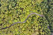 Route du massif des Vosges en été, Vosges, France