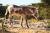 Donkey in a meadow, Vaucluse, France