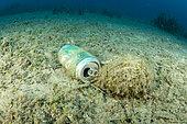 Can of beer waste on seabed, Vis Island, Croatia, Adriatic Sea, Mediterranean