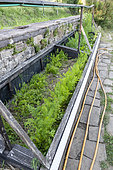 Growing carrots under chassis in summer, Vosges, France