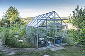 Greenhouse of tomatoes in a vegetable garden in summer, Vosges, France