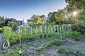 Private organic vegetable garden in summer, Vosges, France