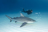 Bull Shark, Carcharius leucas, South Bimini Island, Caribbean Sea.
