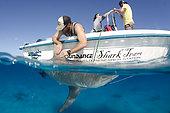 Bull Shark, Carcharius leucas, shark tagging, shark research, Bimini Shark Lab, South Bimini Island, Caribbean Sea.