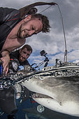 Lemon Shark (Negaprion brevirostris) being photographed by a diver on a boat at Tiger Beach; a popular shark diving spot on Little Bahama Bank in the Northern Caribbean.