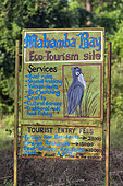 Entrance to the Mabamba reserve to see the Nile shoebill (Balaeniceps rex), which feeds mainly on lungfish (protoptera = bony lung fish that bury themselves in the mud when water runs out, Mabamba marshes, Uganda