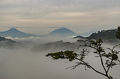Forêt tropicale humide, Volcans Virunga en arrière-plan, La forêt ombrophile du parc national impénétrable de Bwindi, Collines d'Afrique centrale, Ouganda