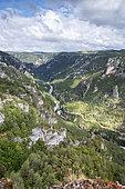 Gorges du Tarn from the Roc des Hourtous, La Malène, Lozère, France