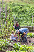 Grandfather and his granddaughters gardening in a vegetable garden in summer, Moselle, France