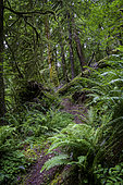 Trail through temperate forest, western slope, Cascade Mountains, Oregon.