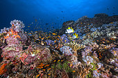 Colorful coral reef at 18 meters depth, Boat pass, Mayotte
