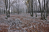 First snow in the Espinouse State Forest, Hérault, France