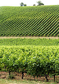 View of the Gaillac vineyard from the Domaine de Vaysette, Tarn, France