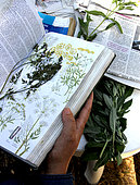 Herbarium, observation, composition, protection, manufacture, constitution, realization, France