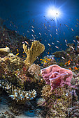 Underwater atmosphere with coral, sponge and sun, Mayotte