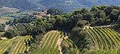 Vineyards of Suzette in the Dentelles de Montmirail, Vaucluse, Provence, France