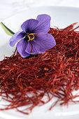 Crocus saffron (Crocus sativus), after harvest, pruning, stigmas, flower, at the saffron producer Claude Ancedy, Chissey-sur-Loue, Jura, France