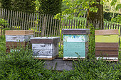 Beehives in a garden in spring, Somme, France