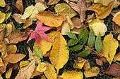 Fallen leaves on the ground, trees, autumn, Parc de la Marseillaise, Guebwiller, Haut-Rhin, France
