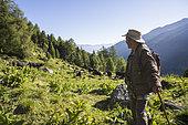 Shepherd watching a herd of Hérens cows, Val de Nendaz, Valais, Switzerland