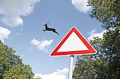 Deer jumps out of the traffic sign, funny, freedom, montage, Lauda, Germany, Europe