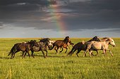 Freedom in Mongolian steppe. Khentii province, Mongolia, Asia