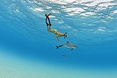 Snorkeler and young Atlantic spotted dolphin (Stenella frontalis), Grand Bahama, Bahamas, Central America